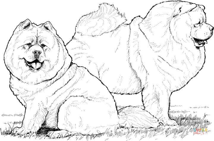 Chow Chow coloring #6, Download drawings