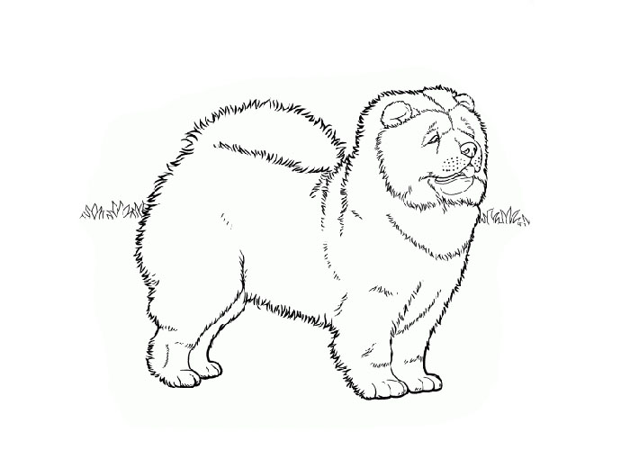 Chow Chow coloring #2, Download drawings