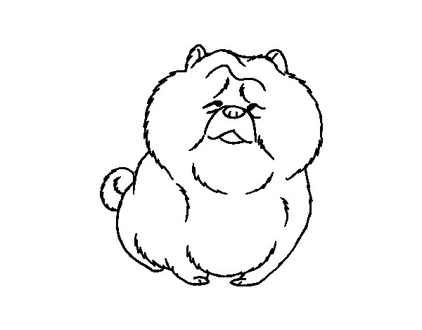 Chow Chow coloring #4, Download drawings