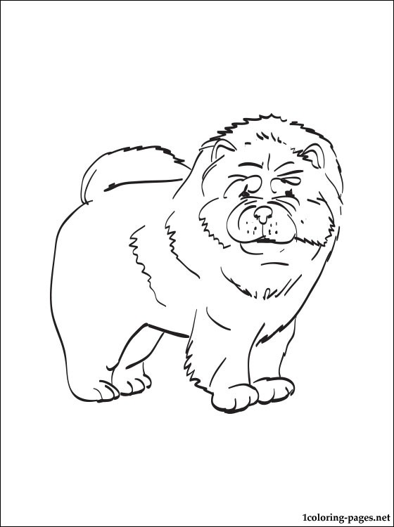 Chow Chow coloring #3, Download drawings