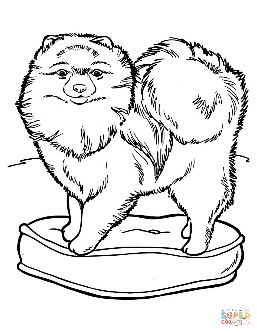 Chow Chow coloring #12, Download drawings