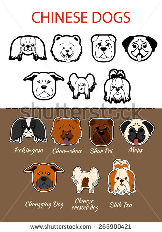 Chow Chow svg #3, Download drawings