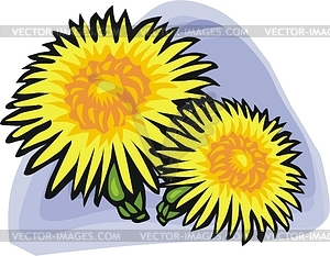 Chrysanthemum clipart #1, Download drawings