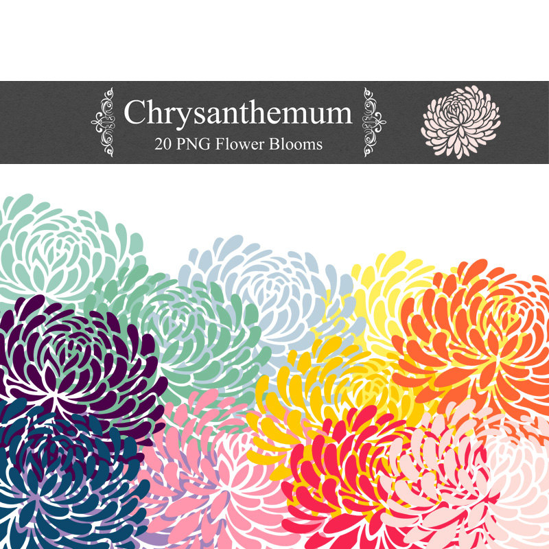 Chrysanthemum clipart #4, Download drawings