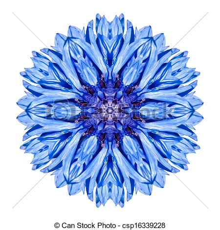 Chrysanthemum clipart #12, Download drawings