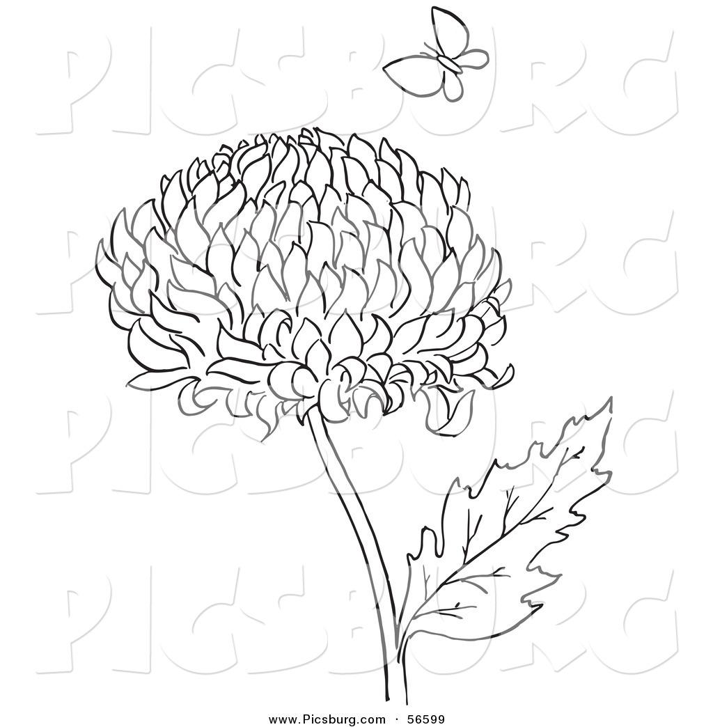 Chrysanthemum coloring #15, Download drawings