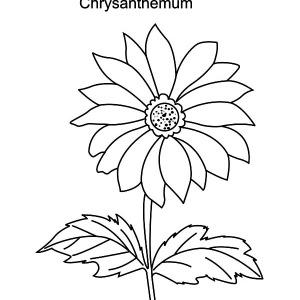 Chrysanthemum coloring #10, Download drawings