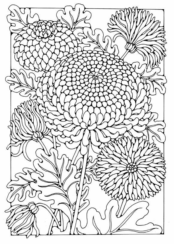 Chrysanthemum coloring #9, Download drawings