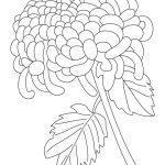 Chrysanthemum coloring #13, Download drawings