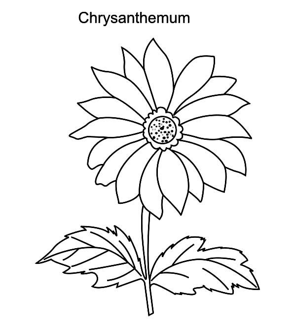 Chrysanthemum coloring #19, Download drawings