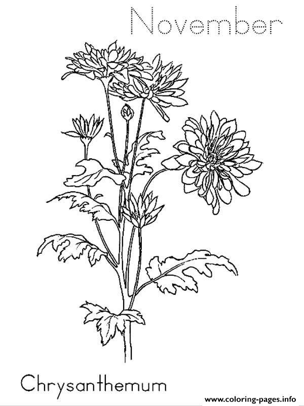 Chrysanthemum coloring #1, Download drawings