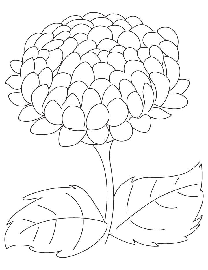 Chrysanthemum coloring #14, Download drawings