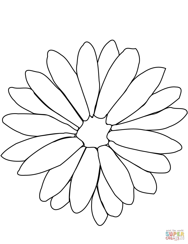 Chrysanthemum coloring #2, Download drawings