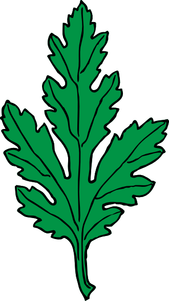 Chrysanthemum svg #14, Download drawings