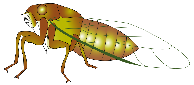 Cicada clipart #19, Download drawings