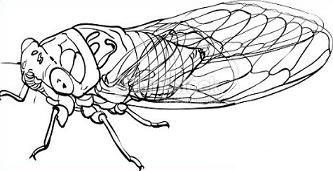 Cicada clipart #15, Download drawings