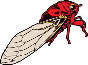 Cicada clipart #7, Download drawings