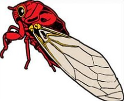 Cicada clipart #2, Download drawings