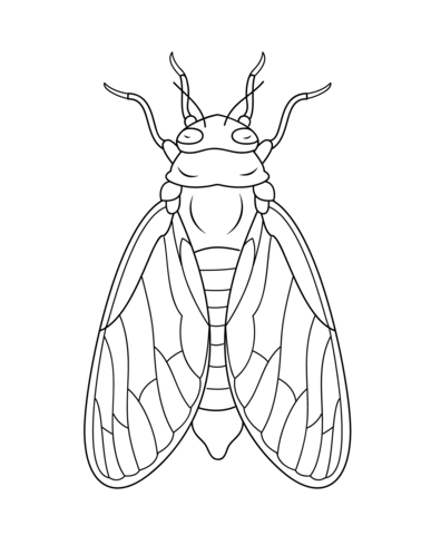 Cicada coloring #17, Download drawings