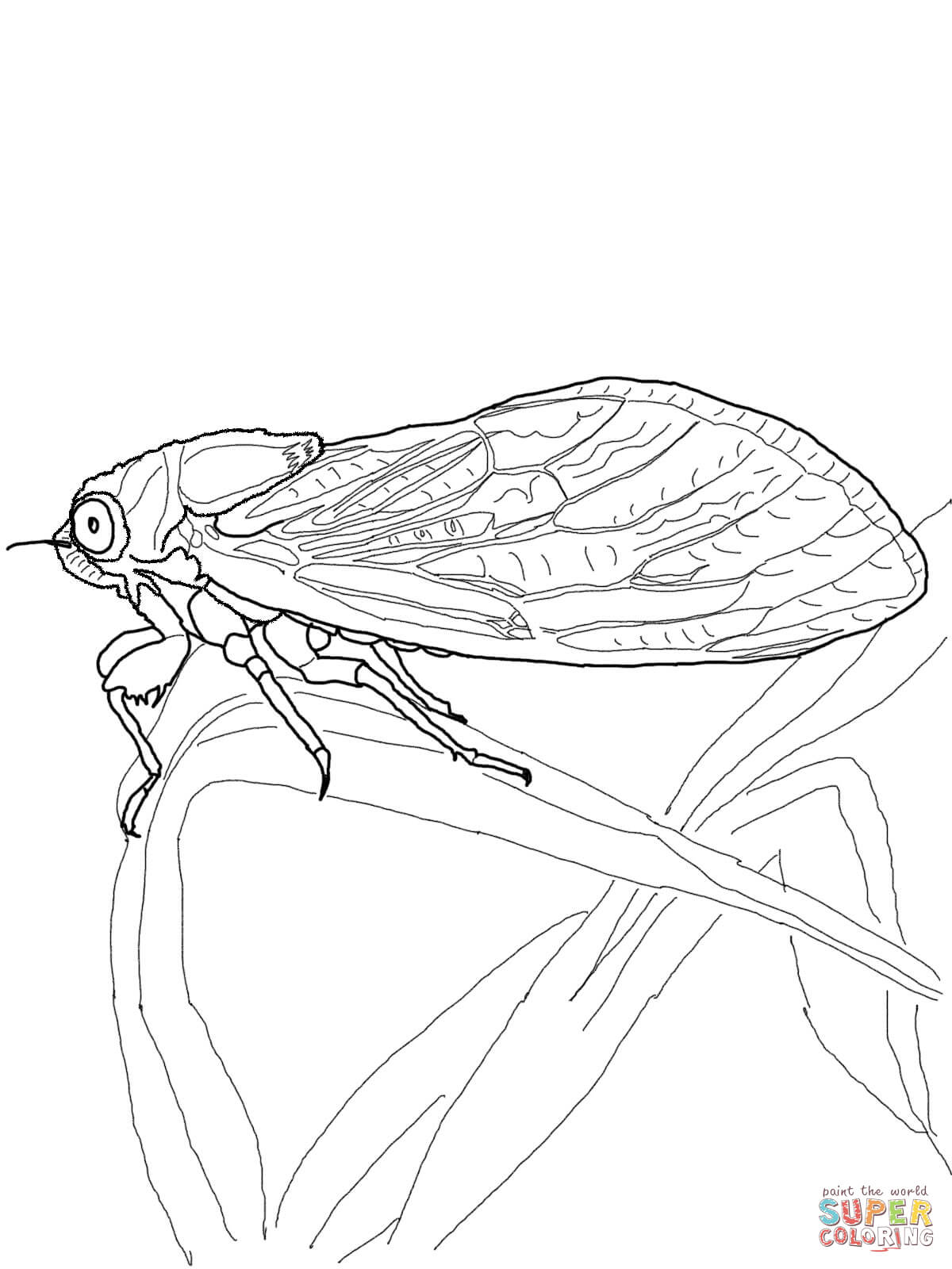 Cicada coloring #12, Download drawings