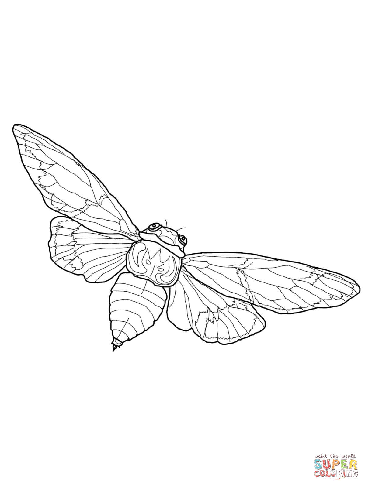 Cicada coloring #2, Download drawings