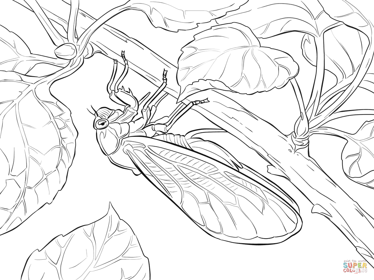 Cicada coloring #3, Download drawings
