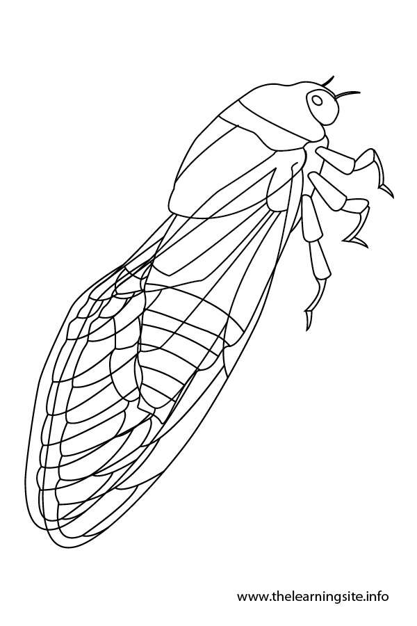 Cicada coloring #18, Download drawings