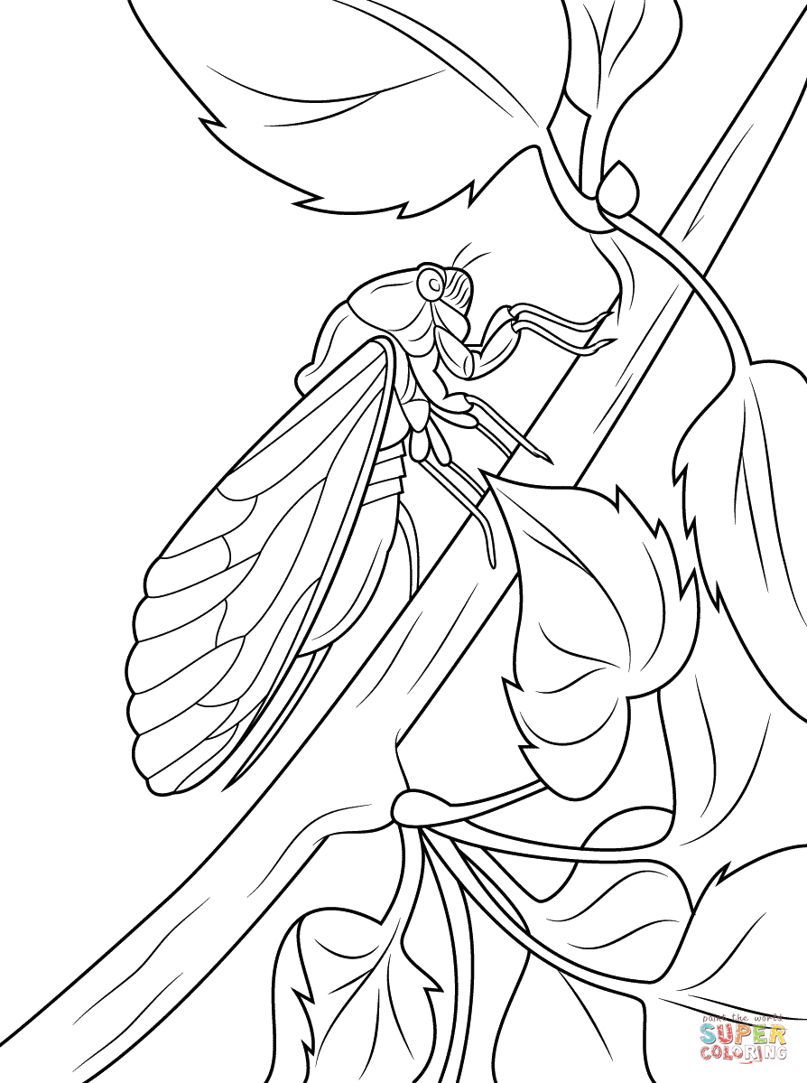 Cicada coloring #20, Download drawings