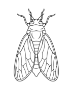 Cicada coloring #16, Download drawings