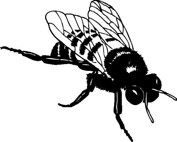 Cicada svg #18, Download drawings