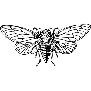 Cicada svg #17, Download drawings