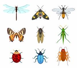Cicada svg #6, Download drawings