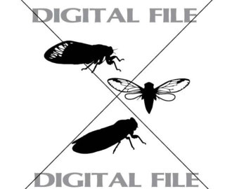 Cicada svg #1, Download drawings