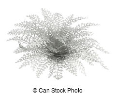 Cineraria clipart #20, Download drawings