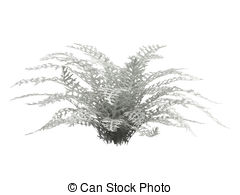 Cineraria clipart #16, Download drawings