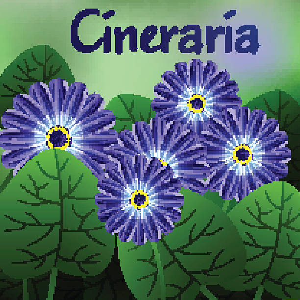 Cineraria clipart #14, Download drawings