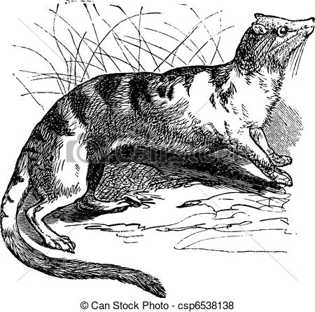 Civet clipart #2, Download drawings