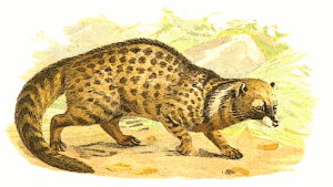 Civet clipart #6, Download drawings