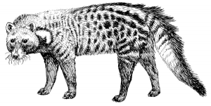 Civet clipart #3, Download drawings