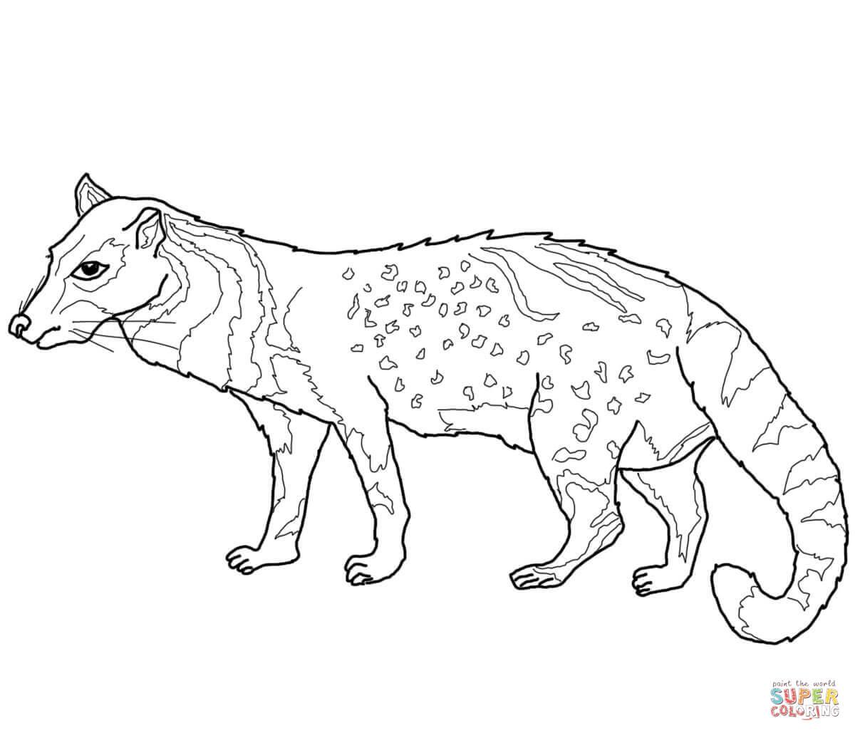 Civet coloring #14, Download drawings