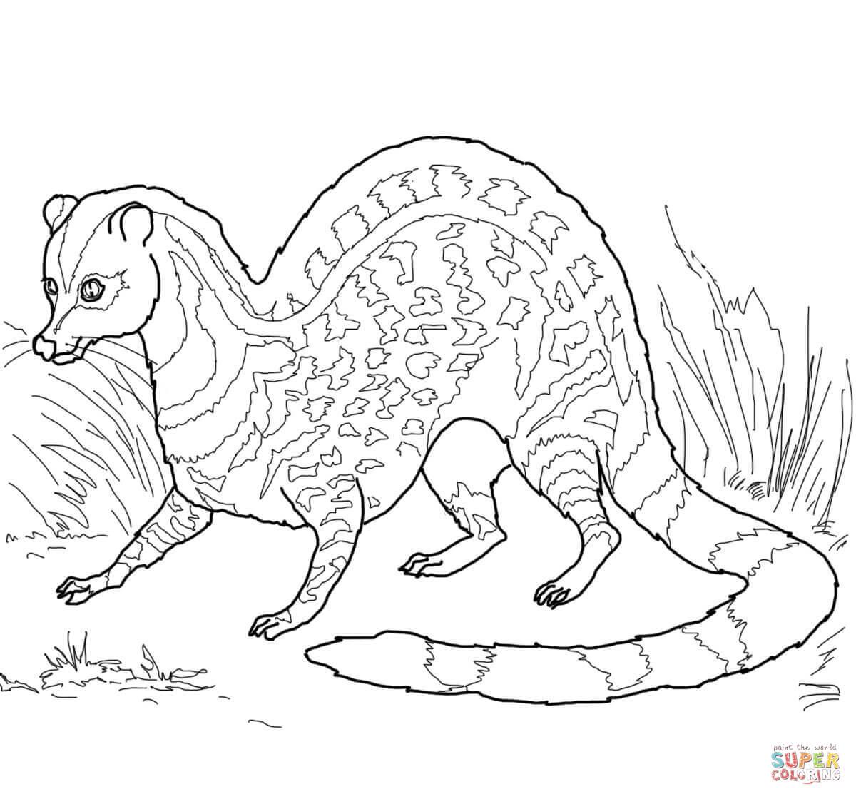 Civet coloring #6, Download drawings
