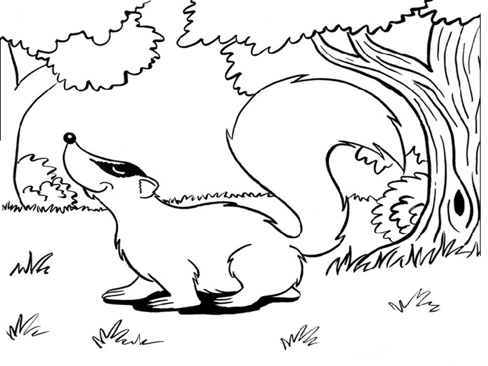 Civet coloring #19, Download drawings