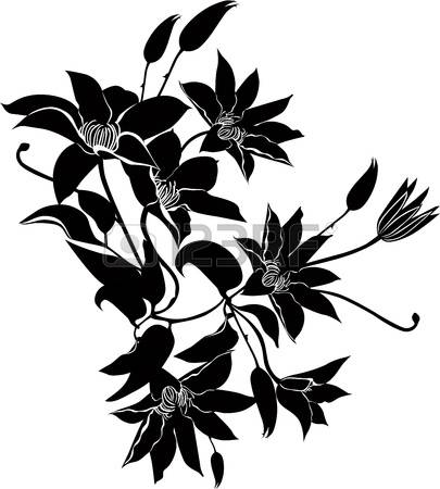 Clematis clipart #7, Download drawings
