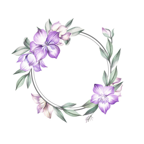Clematis clipart #9, Download drawings