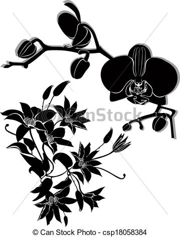 Clematis clipart #5, Download drawings