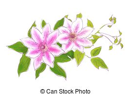 Clematis clipart #18, Download drawings