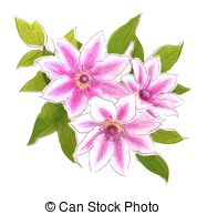 Clematis clipart #16, Download drawings