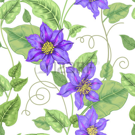 Clematis clipart #8, Download drawings
