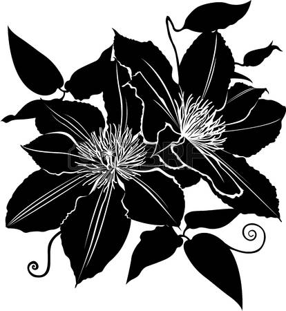 Clematis clipart #11, Download drawings