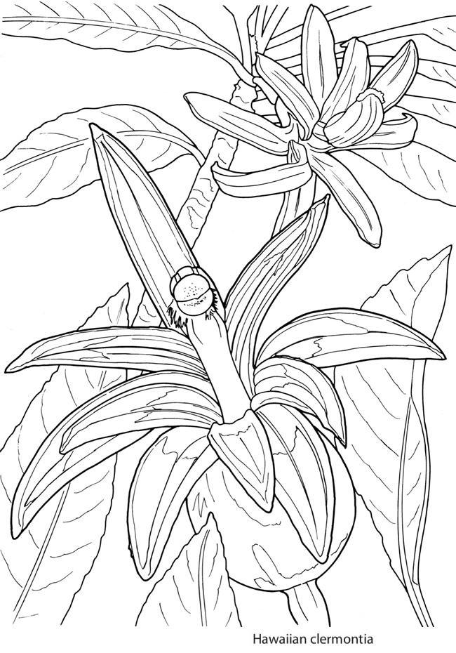 Click N Bloom coloring #13, Download drawings